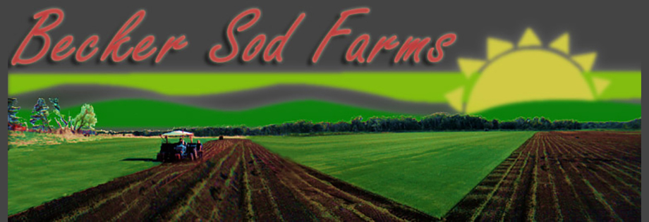 Sod and Turf Supplier in Minnesota